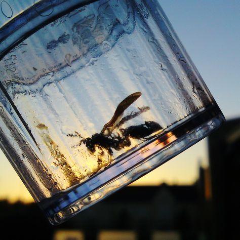 Wespenfalle selber machen – Mittel gegen die Wespenplage