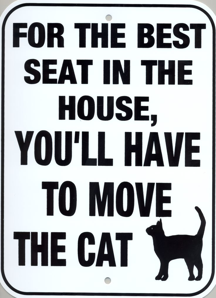 For the best seat in the house, you'll have to move the cat.