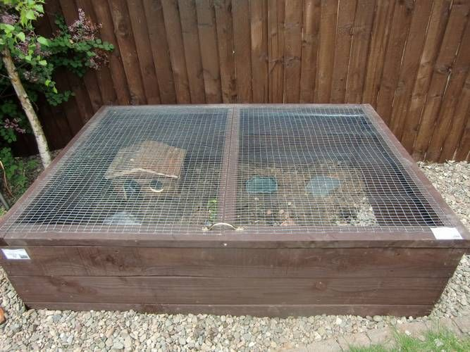 outdoor tortoise enclosure - Google Search