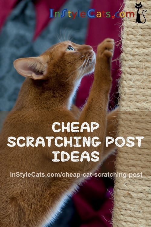 Want A Cheap Cat Scratching Post? If money is short, there are good ways to have a cheap cat scratching post for your cat to flex her claws and muscles on.