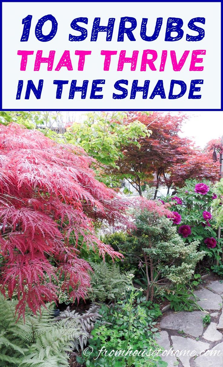 best 25 backyard trees ideas on pinterest backyard privacy