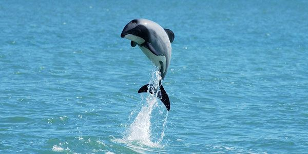 · Petition Prime Minister of New Zealand: Last chance to save the dolphin Maui · Change.org