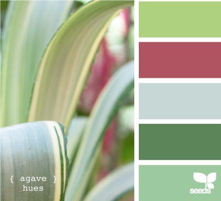 agave hues
