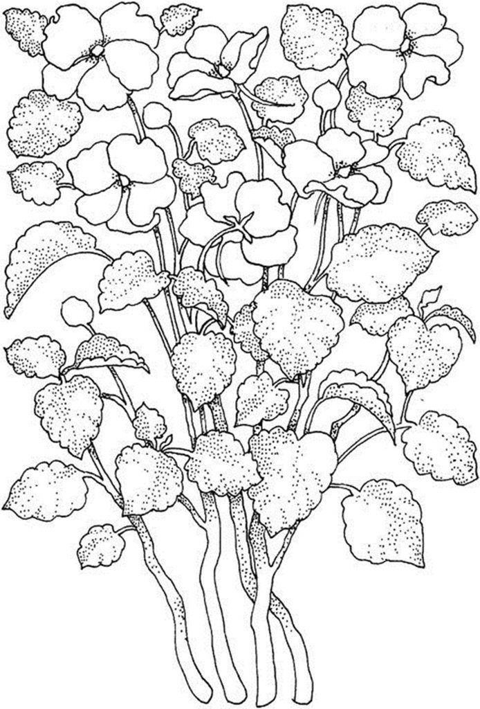 73 Best Flower Coloring Pages Images On Pinterest