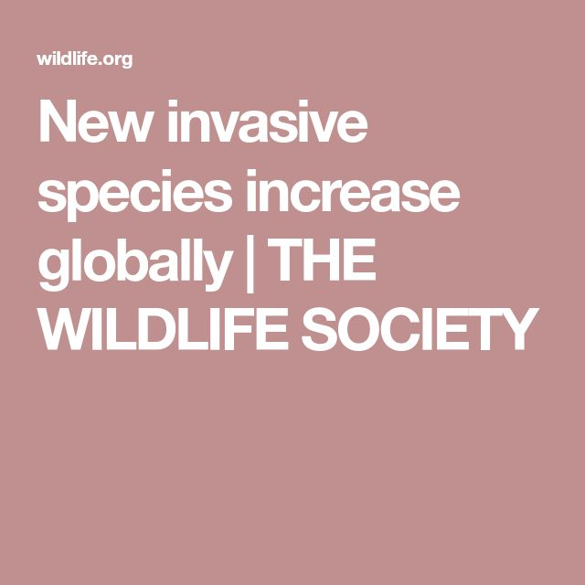New invasive species increase globally   THE WILDLIFE SOCIETY