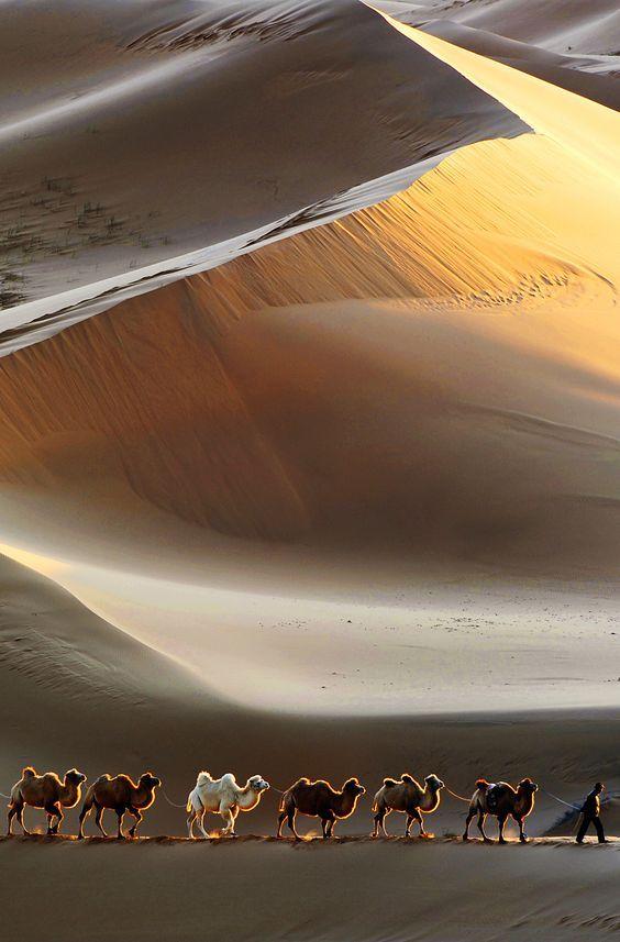 Gobi Desert, Mongolia                                                                                                                                                                                 More
