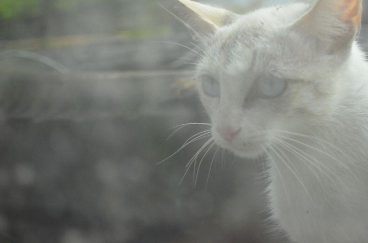 Gato by Leonardo Lalvay on 500px