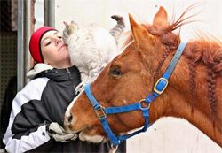 Get better at understanding what horses try to communicate in their actions, verbal, and body language. Understanding horse behavior and language is known to help achieve successful and caring outcomes.