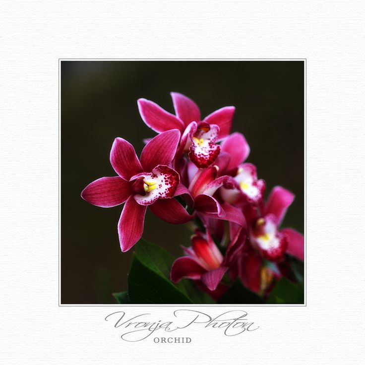 Photograph Orchid by Vronja Photon on 500px