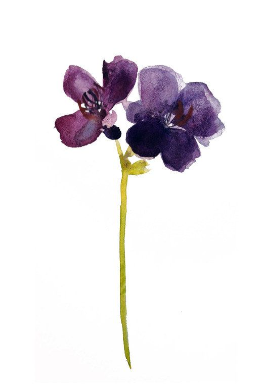 aubergine princess flower - purple, eggplant, deep purple, modern, minimalist, watercolor, impressionist, botanical, painting, giclee, art