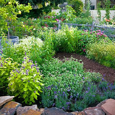 4 easy care flower beds summer flowers herbal teas and teas for Easy care flowers for garden