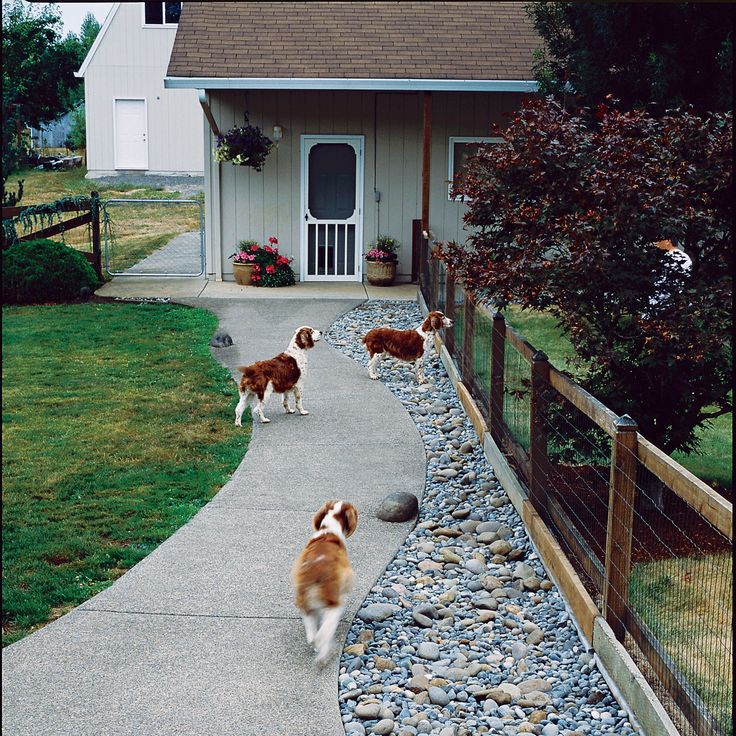 48 Best Dog-Scaped Yards Images On Pinterest