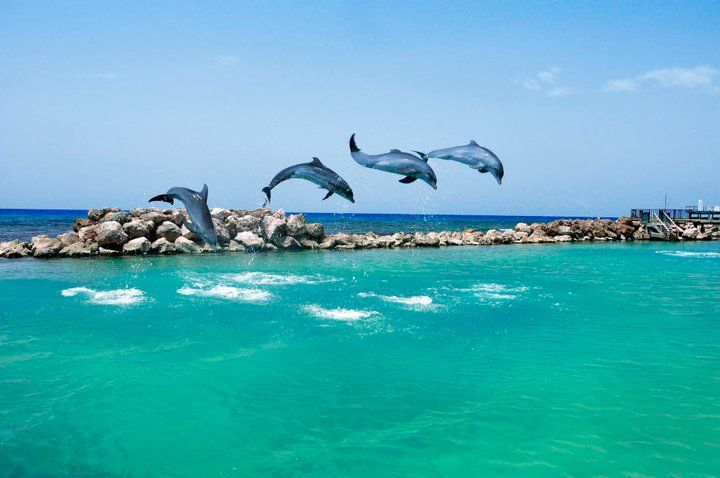 Swam with dolphins in Jamaica at Dolphin Cove in Ocho Rios with