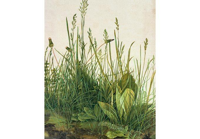 Kunstdruck Fototapete Albrecht Dürer Das große Rasenstück als Dekoration | wall-art.de