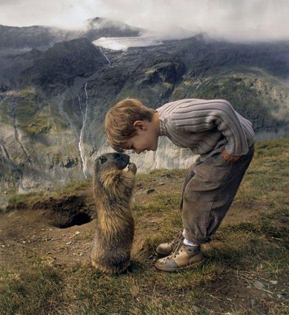 diacho de marmota