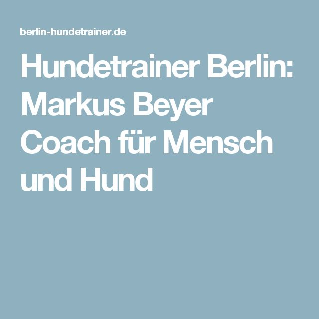 Hundetrainer Berlin: Markus Beyer Coach für Mensch und Hund