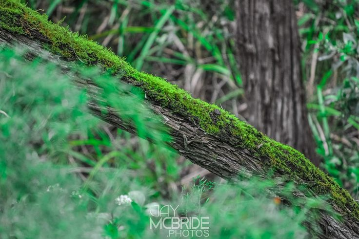 Top to bottom by http://jaymcbride.photos  #australia #branches #clarity #environmental #flower #forest #green #greenlife #growth #log #nature #pemberton #rainforest #sharp #spring #summer #tree #trees #vegetation #widelife #woods