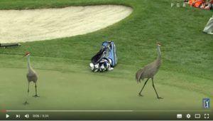 """La Top 10 degli incontri """"inaspettati"""" sul campo del PGA Tour [Video] http://www.dotgolf.it/57524/incontri-pga-tour/"""