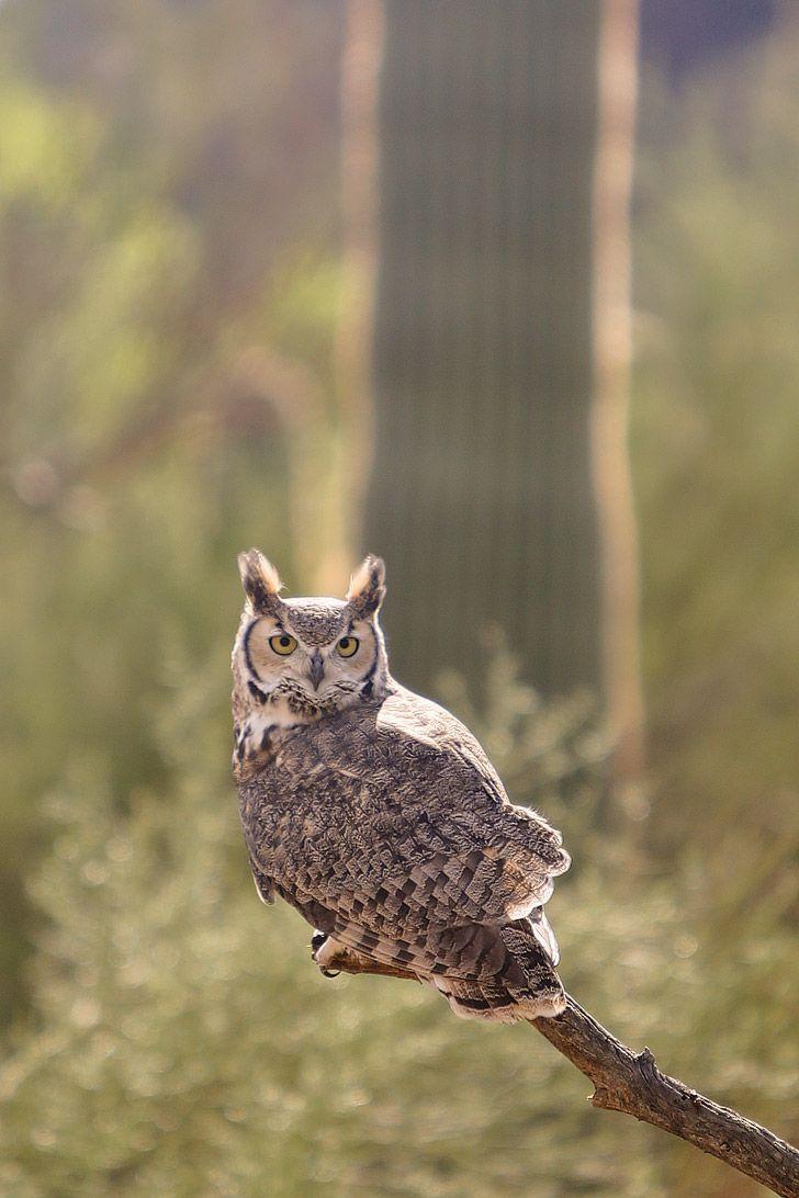 Best 25+ Owls Ideas On Pinterest