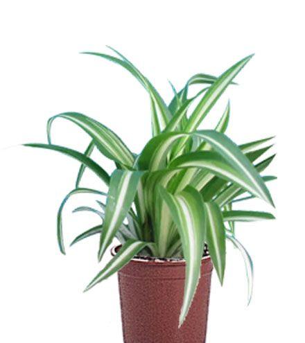 10 plantes dépolluantes et leurs vertus