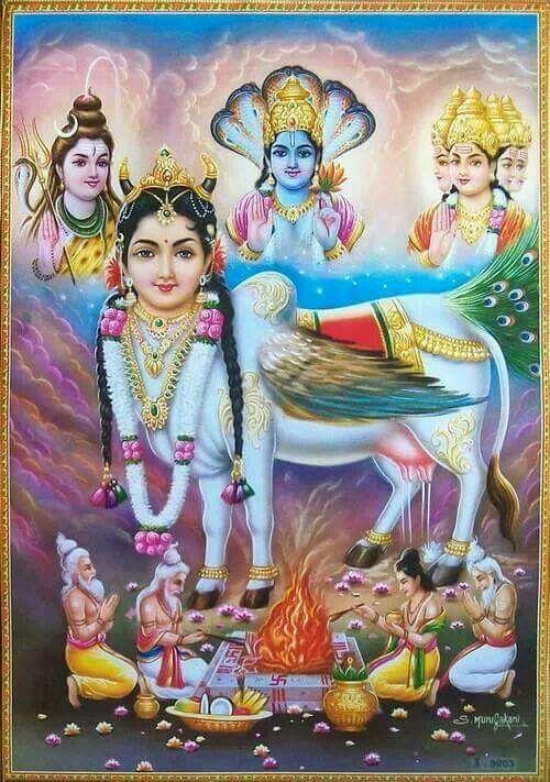 Kaamdhenu with brahmha Vishnu Mahesh