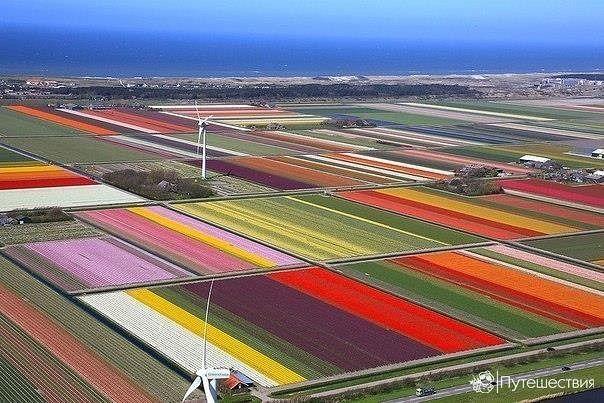 Тюльпановые поля, Нидерланды