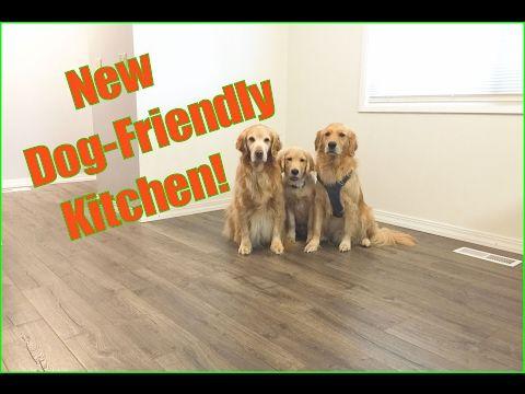 DOG-FRIENDLY KITCHEN UPGRADE! - Pergo Outlast + Review - YouTube