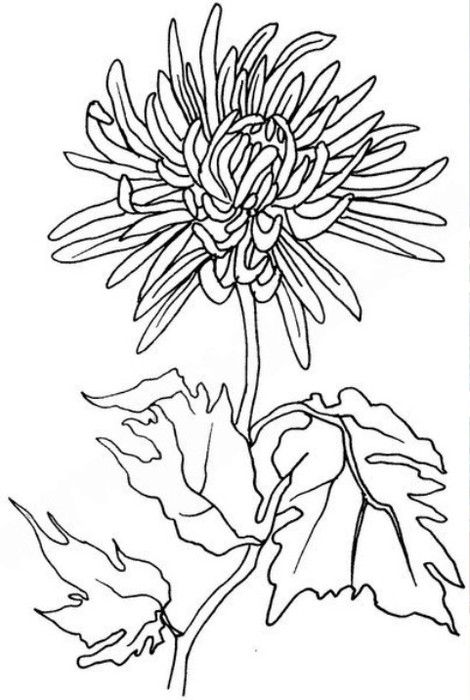 Columbine Flower Line Drawing : Images about pattern flower on pinterest coloring