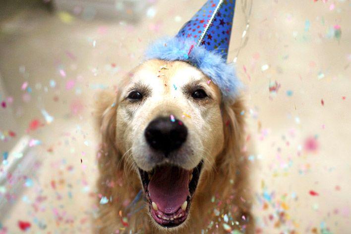 O que dar de presente a um cão aniversariante?