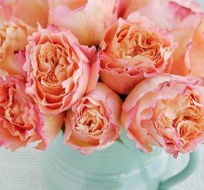 gorgeous color!Orange Flower, Wedding Colors Schemes, Aqua Blue, Pink Weddings, Colours Schemes, Gardens Rose, Coral Wedding, Blue Bouquets, Turquoise Weddings