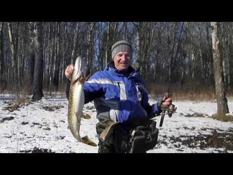 Ловля хищной рыбы на спиннинг. #pike #fishing #fish