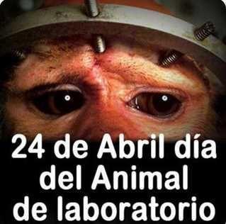 activistas rescatan animales de laboratorio - Buscar con Google