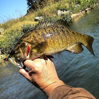Time for Fall Smallmouth Bass on the Fly.