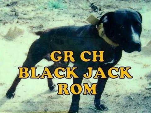 Casinos ch blackjack rom 32 red casino review