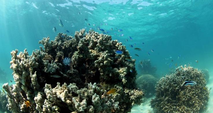 Ningaloo Reef 2012