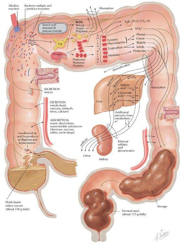 Czy odpowiednio dbasz o swoje jelita ? Jeśli nie, lepiej byś zaczął już teraz, by upewnić się, że Twoje jelito poprawnie funkcjonuje. Badaczka Body Ecology, Donna Gates wyjaśnia, że jelito jako część układu pokarmowego powinno być zdrowe, by zapewnić zdrowie całemu organizmowi. Faktem jest, że wszystkie nasze komórki i tkanki, tak samo jak wątroba, są … Czytaj dalej Przepis: Jak usunąć toksyny z Twojego jelita!