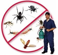 Our pest control technicians are highly trained and skilled to get destructive ants and other bugs out of your home.... http://www.pestchaser.com.au
