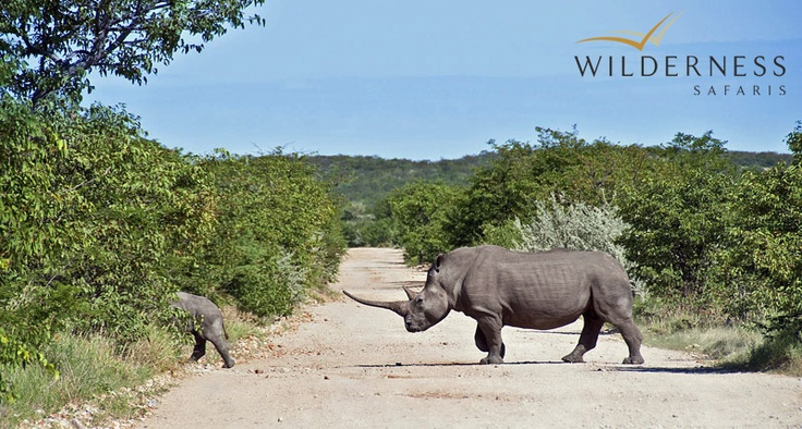 Ongava Tented Camp - The Ongava Game Reserve features much of the characteristic wildlife of the area, with both desert-adapted black and white rhino to be seen as well as lion. #Safari #Africa #Namibia #WildernessSafaris