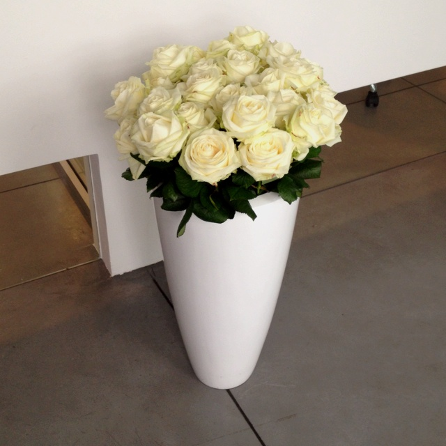 Rose in Milan Office Adamis
