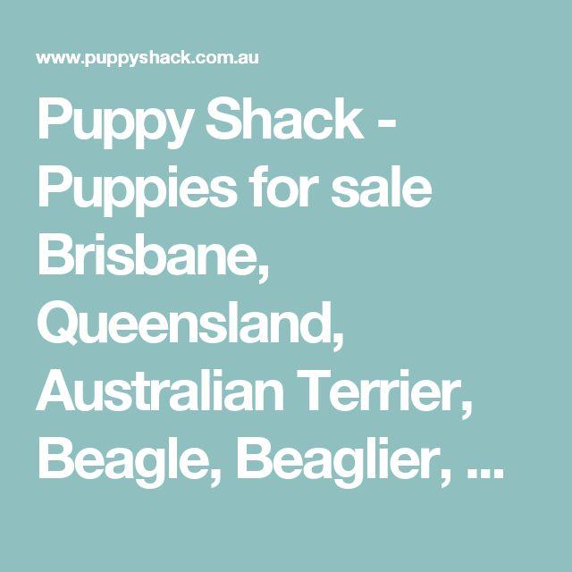 Puppy Shack - Puppies for sale Brisbane, Queensland, Australian Terrier, Beagle, Beaglier, Bichon Frise, Cavalier King Charles Spaniel, Cavoodle, Chihuahua, Cocker Spaniel, English Bull Terrier, Golden Retriever, Groodle, Jack Russell x, Labradoodle, Labrador, Lhoodle, Maltese x, Mini Dachshund, Mini Fox Terrier, Mini Poodle, Mini Schnauzer, Moodle, Poodle, Pug x, Rottweiler, Shih Tzu, Shoodle, Spanador, Springer Spaniel x, Spoodle, Tibetan Spaniel Brisbane