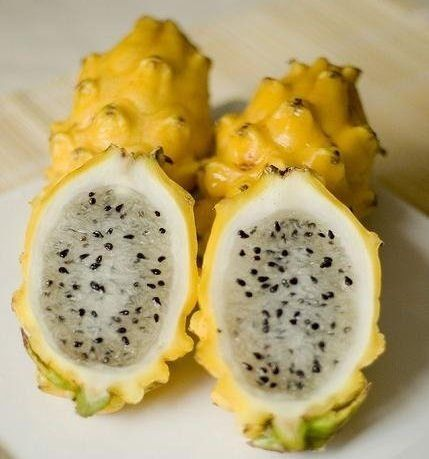 Dragon Fruit ou Pitaia