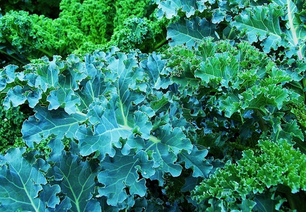 Vegan Recipe: Make-You-Sigh Massaged Kale Salad with Toasted Pine Nuts