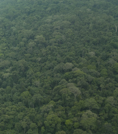 The Congo Basin is the 2nd largest remaining expanse of tropical wilderness in the world. However the area is increasingly threatened by a raft of issues, including pressure from slash and burn agriculture.