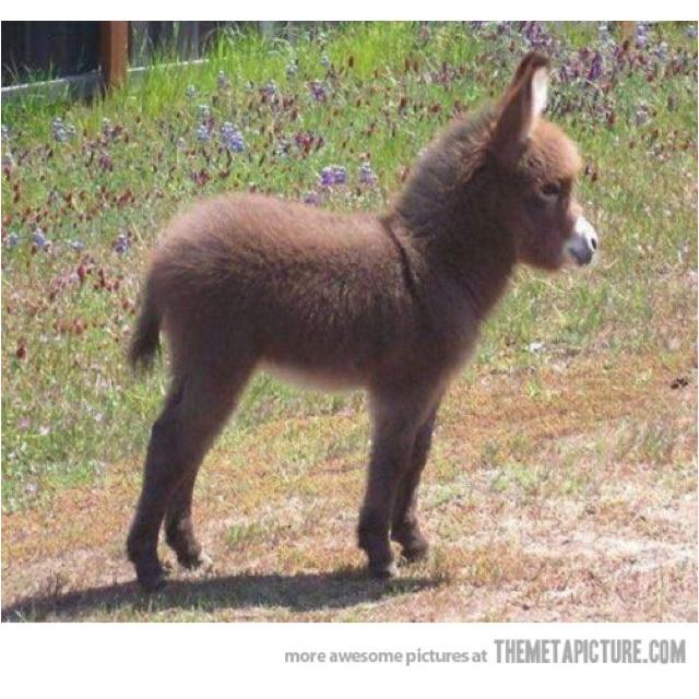 A baby donkey
