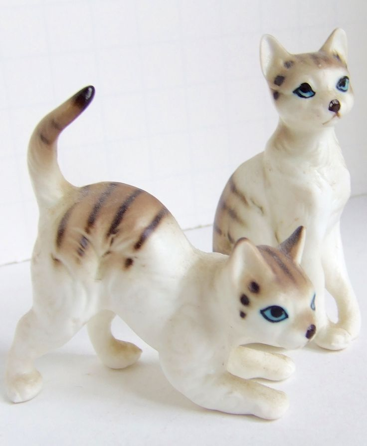 how much are the hairless cats