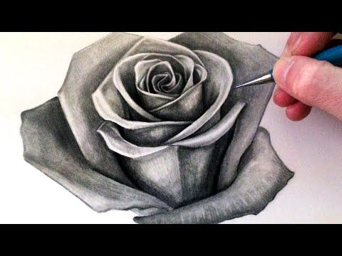 how to draw a realistic rose for beginners