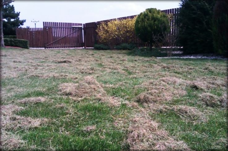 Jarní údržba trávníku vertikutací