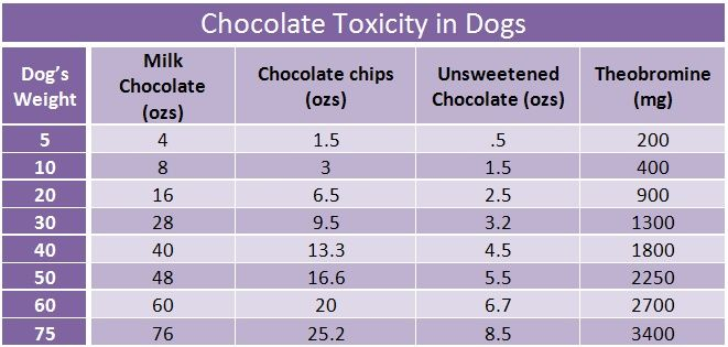 chocolate toxicity chart for dogs baking chocolate causes. Black Bedroom Furniture Sets. Home Design Ideas