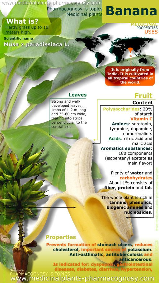 Banana benefits. Infographic. Summary of the general characteristics of the Banana plant. Medicinal properties, Benefits and uses more common.  http://www.medicinalplants-pharmacognosy.com/herbs-medicinal-plants/banana-benefits/banana-properties-infographic/