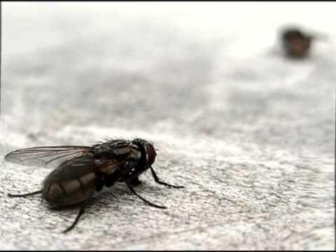 Remedios caseros para eliminar las moscas de tu hogar